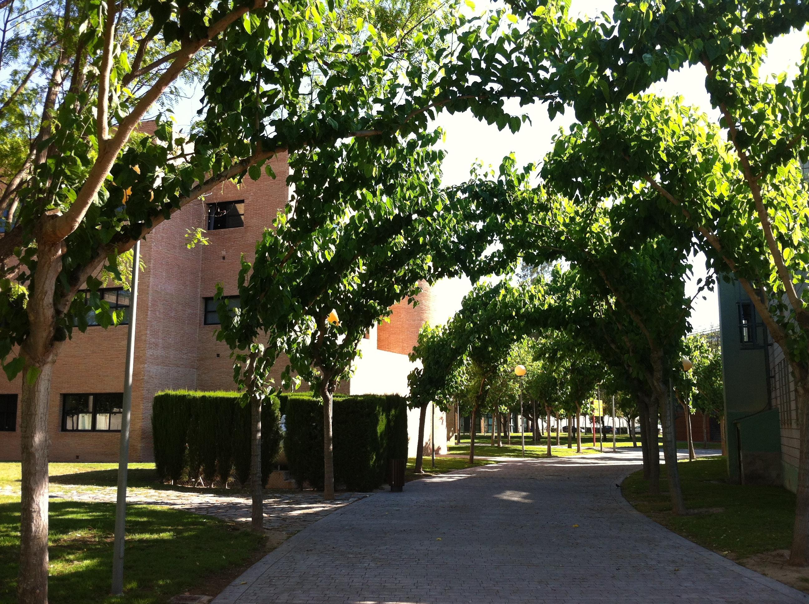 calle-pasillo-2