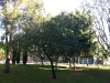 plaza-de-la-biblioteca